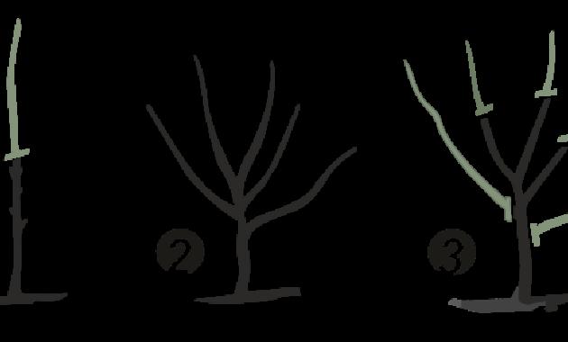 Macam-Macam Serta Teknik Pemangkasan Tanaman