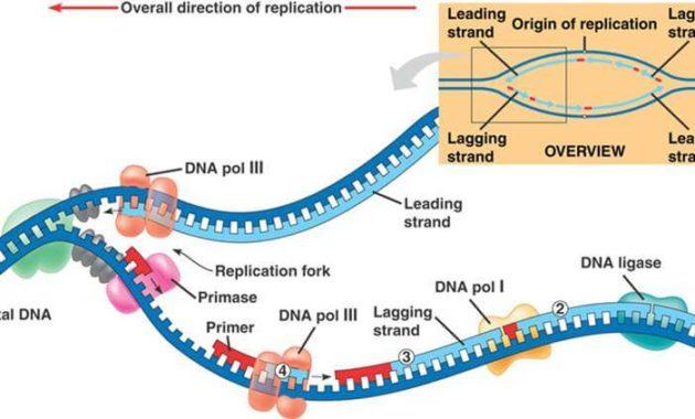 Jenis-jenis Enzim DNA