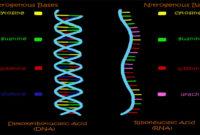 Pengertian RNA Adalah Struktur, Proses dan Tipe-tipe RNA
