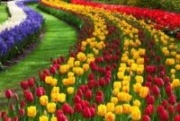 5 Cara Budidaya Tanaman Hias Bunga Dahlia