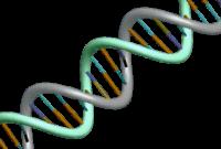 5 Jenis Marka (Penanda) Molekuler Pada Tanaman