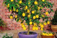 Klasifikasi dan Morfologi Tanaman Lemon