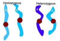 Perbedaan Tanaman Homozigot dengan Tanaman Heterozigot