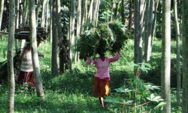 Pengertian Hutan Kemasyarakatan dan Hutan Rakyat