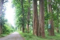 Pengertian Hutan Lindung Adalah Fungsi, Aspek Hukum dan Kebijakan