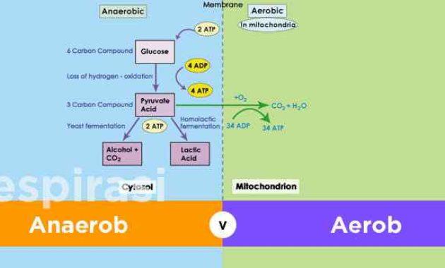 Pengertian Respirasi Anaerobik Adalah Manfaat dan Manfaatnya