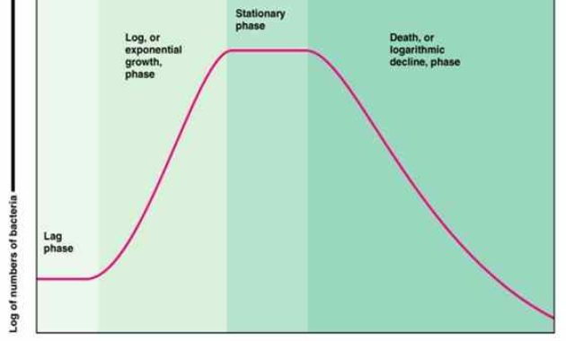 Faktor-Faktor yang Mempengaruhi Pertumbuhan Mikroba
