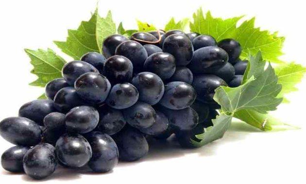 Panen Tanaman Anggur