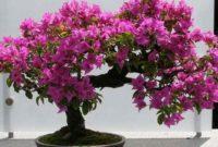 Syarat Tumbuh Tanaman Bunga Kertas