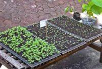 Cara Membuat Media Persemaian Untuk Tanaman Hortikultura
