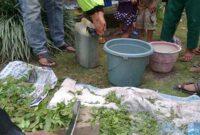 Cara Membuat Pestisida Organik Berdasarkan Hama dan Penyakit yang Menyerang