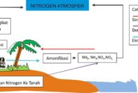 Pengertian dan Proses Siklus Nitrogen