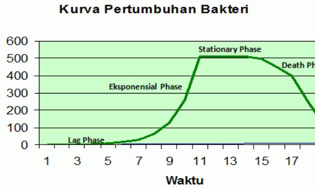 Fase dan Cara Mengukur Pertumbuhan Bakteri