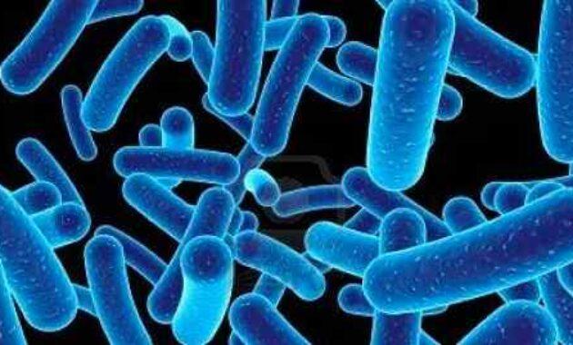 Pengertian Jamur, Bakteri, Virus dan Nematoda