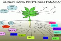 Pengertian Makronutrien dan Mikronutrien Pada Tanah dan Tanaman