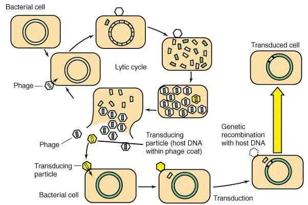 Pengertian dan Metode Transfer Genetik Pada Tanaman