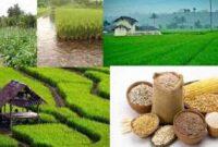 Cara Meningkatkan Produksi Hasil Pangan Pertanian