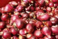 Jenis Varietas Bawang Merah Yang Baik di Tanah Gambut