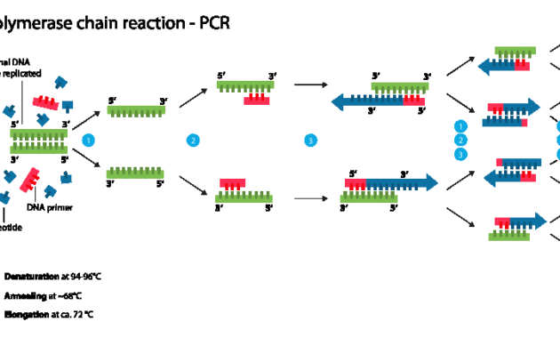 Komponen-komponen Dalam PCR (Polymerase Chain Reaction)