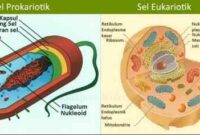 Perbedaan Sel Eukariotik dan Sel Prokariotik